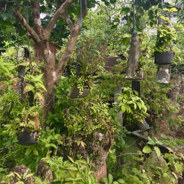 Chiran Taki-An restaurant hanging plants