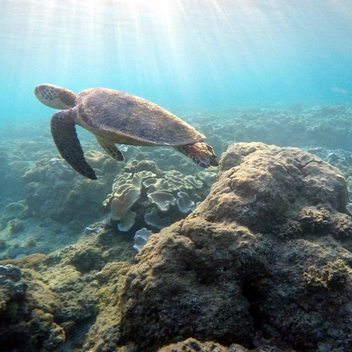Yakushima, Japan   Discover Yakushima's Best Snorkel Spots and Beaches