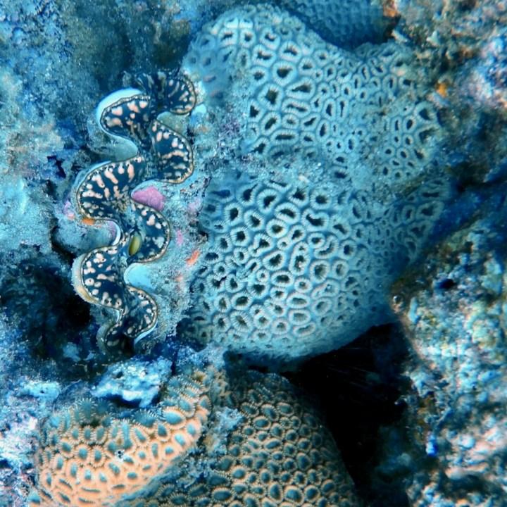 Yakushima snorkelling clams