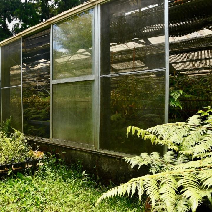 Yakushima Botanical Garden ferns
