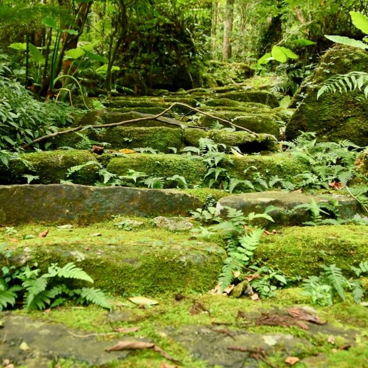 Yakushima Botanical Garden mossy steps