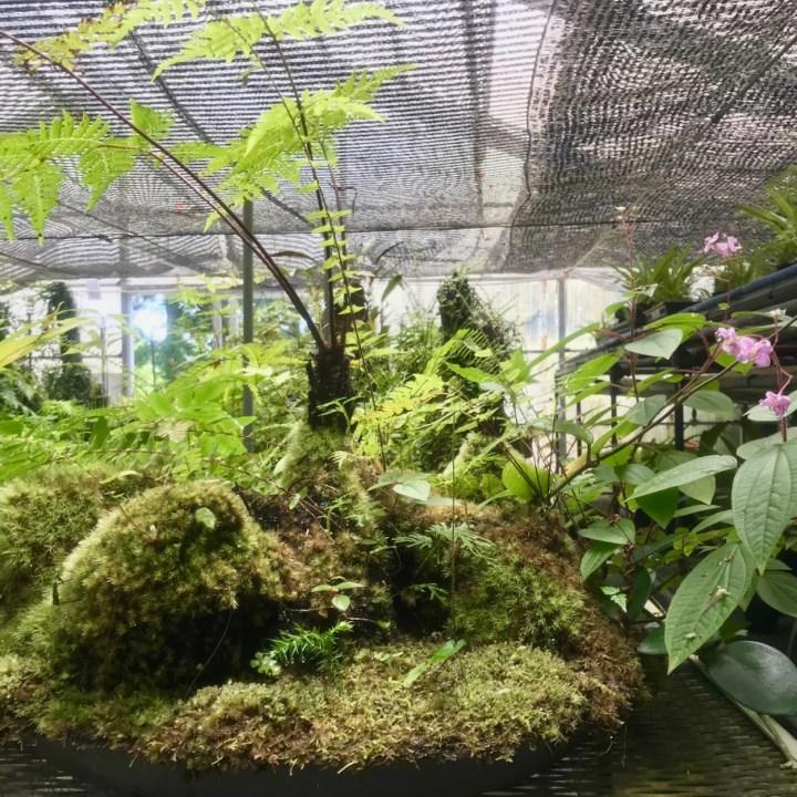 Yakushima Botanical Garden kusamono