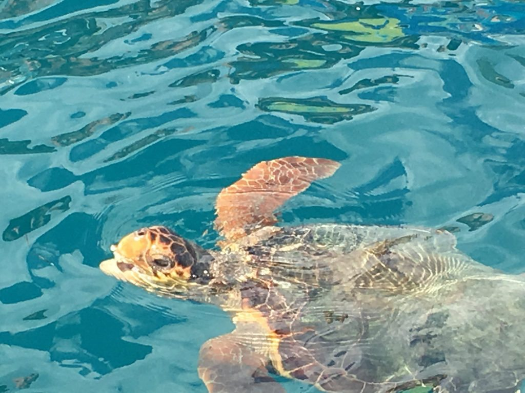 Things to do in Zante - Turtle Spotting