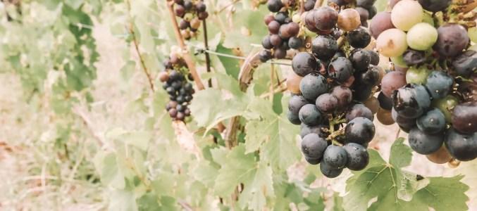 Old Mission Peninsula Wine Tasting