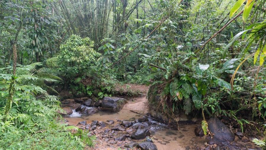 Regenwald am Jesuitentrail