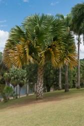 Palmenart, Habitation Clement