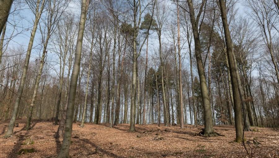 Wald oberhalb des Sees