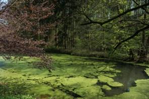 ehemaliger Fischteich bei Weltersbach
