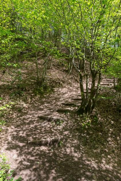 Waldweg im Dhünntal