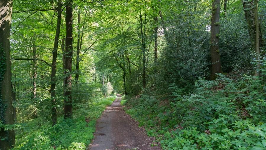 Wald bei Leysiefen