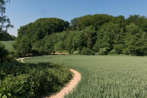 Über Feld und Wald
