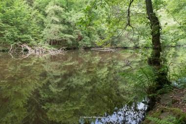 Teich im Herbringhauser Bachtal