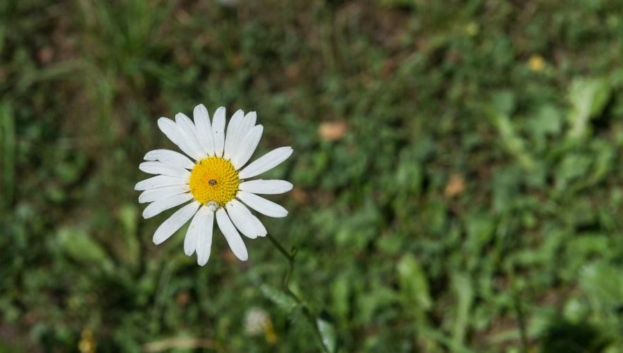 Blüte mit kleinem Besuch