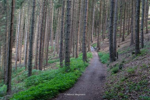 Zwischen Osenau und Glöbusch