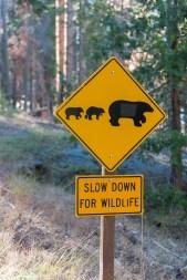 Vor Bären wurde gewarnt