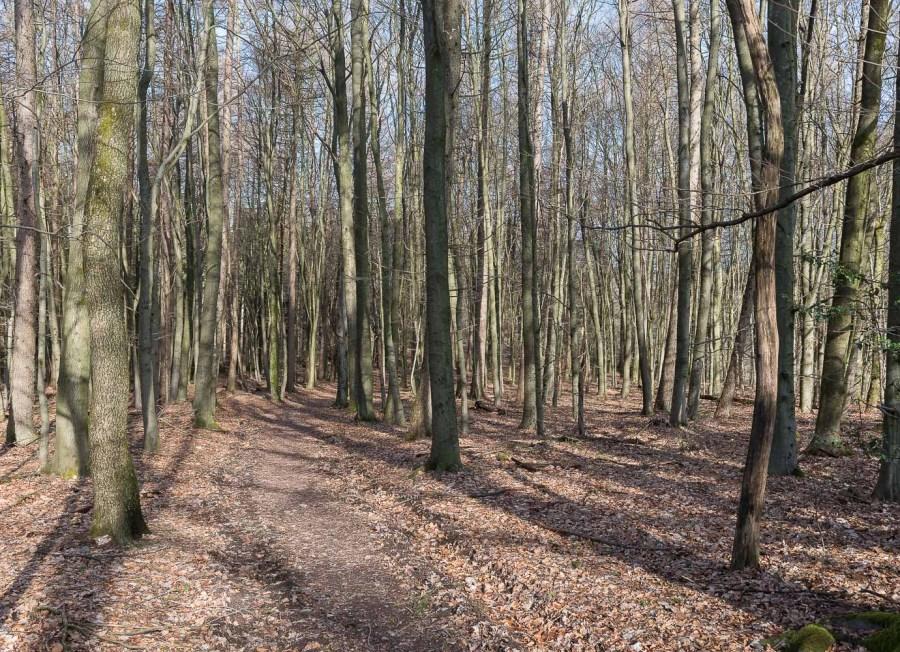 Der Wald ist noch kahl