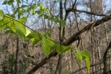 Im Wald grünt es auch