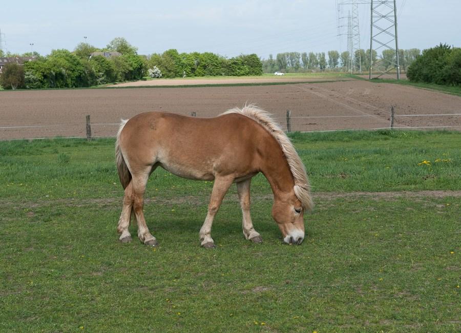 Pferd in Stürzelsberg