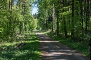 Waldweg vor der B258