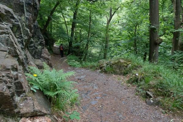Typischer Waldweg