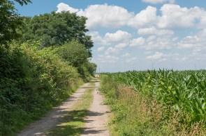 Feldweg entlang dem Baggersee