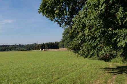 Strecke am Waldrand