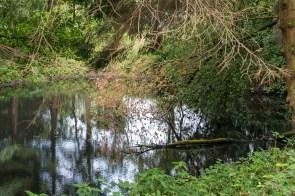 Teich am Wegesrand