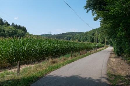 Maisfeld kurz vor dem Ziel