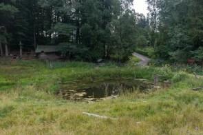 Unterwegs ein kleiner Teich