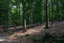 Wald an der Talsperre