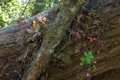Wald bei Ucluelet