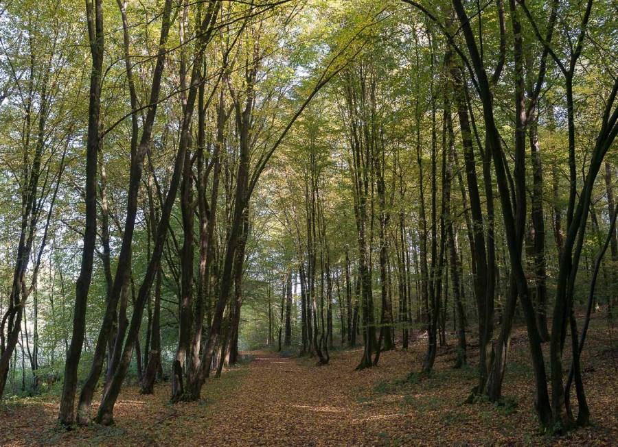 Zwischen Buschhof und Malzhagen im Wald