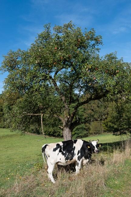 Zug am Apfelbaum