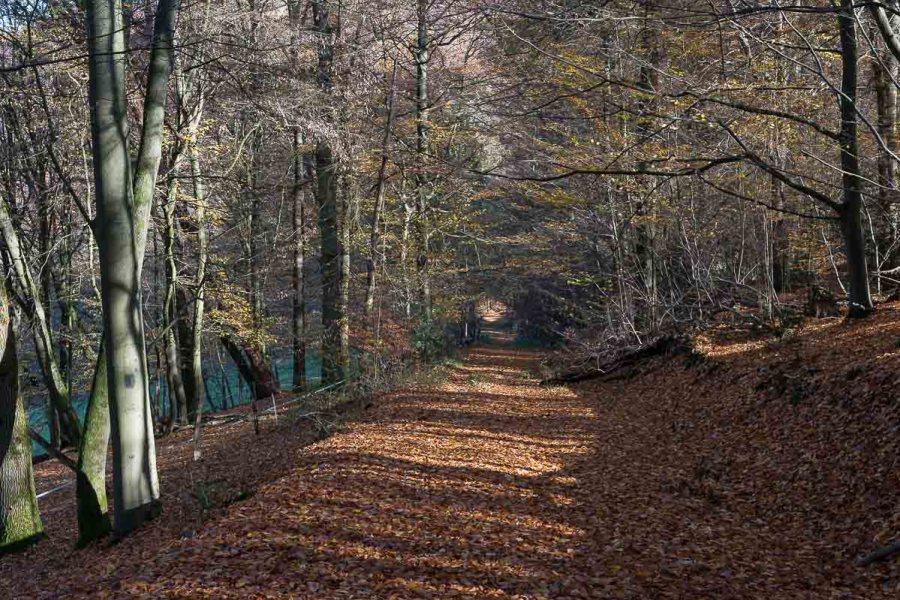 Die Waldwege werden breiter