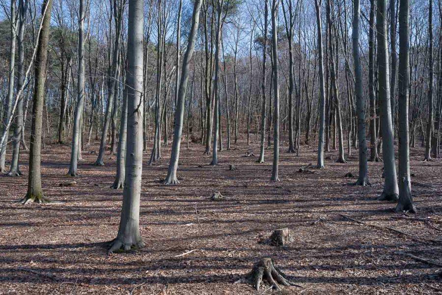 Noch ist der Wald ganz kahl