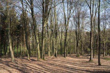 Wald vor Ellinghausen