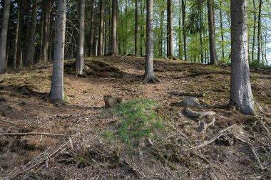 Im Wipperfelder Bachtal