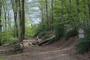 Versperrter Waldweg