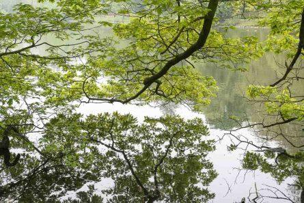 Spiegelung im Rombergpark