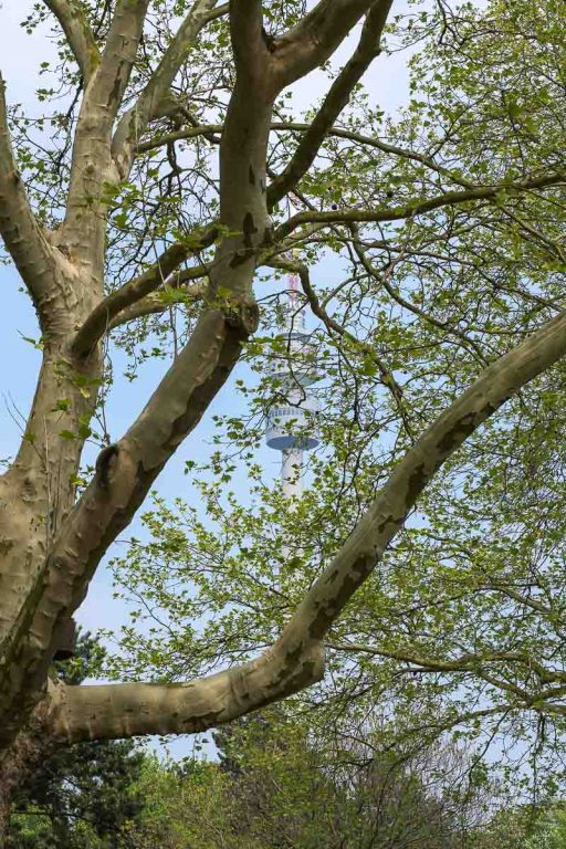 Fernsehturm im Baum