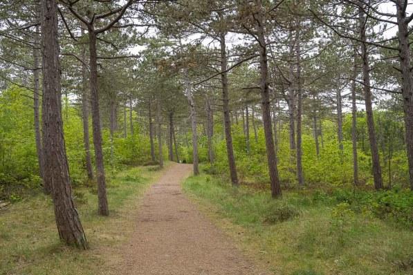 Waldweg westlich von De Koog