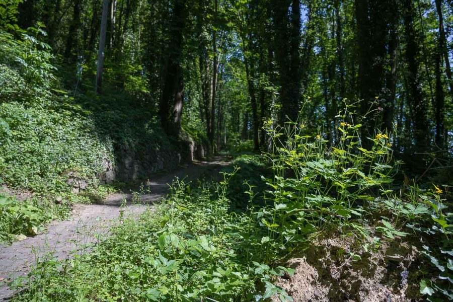 Aufstieg zum Rolandsbogen
