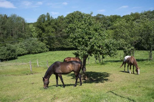 Pferdekoppel bei Verr