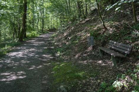 Breiter Waldweg zu Beginn der Wanderung