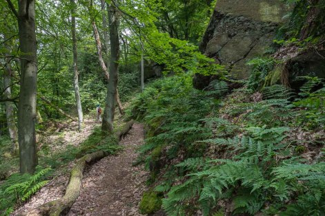 Unterwegs im Wald