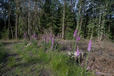 Brachflächen im Wald