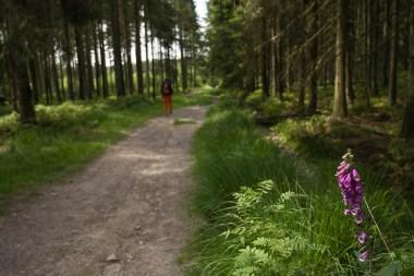 Waldweg mit Fingerhut