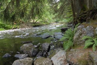 Am Ufer der Rur