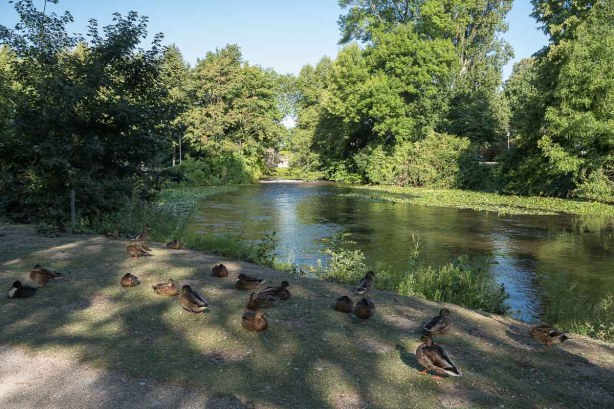 Enten gibt's halt nicht nur bei uns an der Wupper