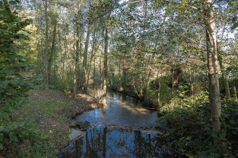 Im Naturschutzgebiet an der Niers